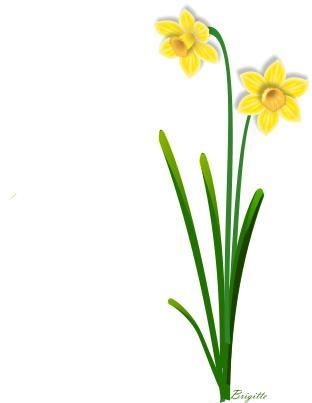 Clip Art Daffodil Clip Art daffodil clipart kid flower clip art panda free images