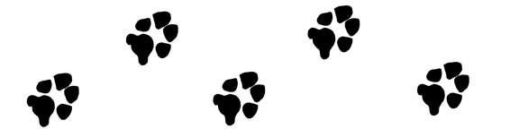 Dog Paw Print Clip Art   Paw Print Graphics For Projects   Dog Paw