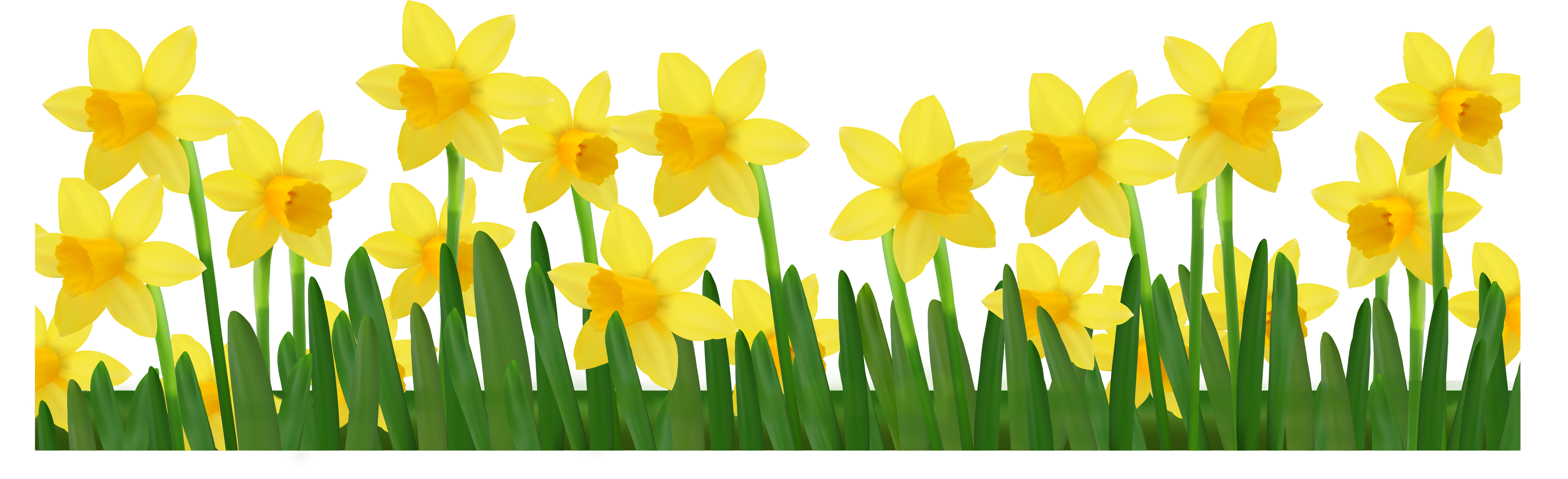 Clip Art Daffodil Clip Art daffodil clipart kid grass with daffodils png picture
