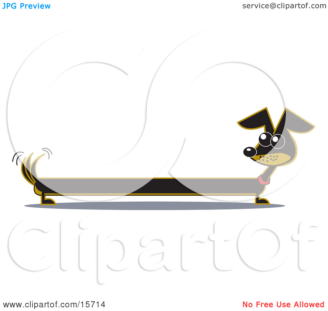 Very Long Dachshund Dog Looking Back At His Tail Clipart Illustration