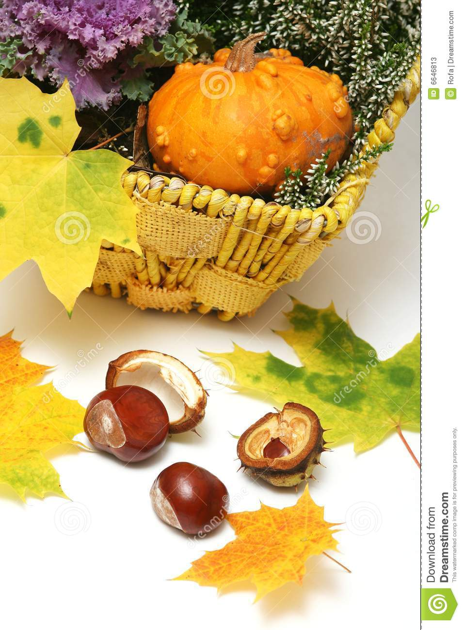 More Similar Stock Images Of   Fall Thanksgiving Decorations