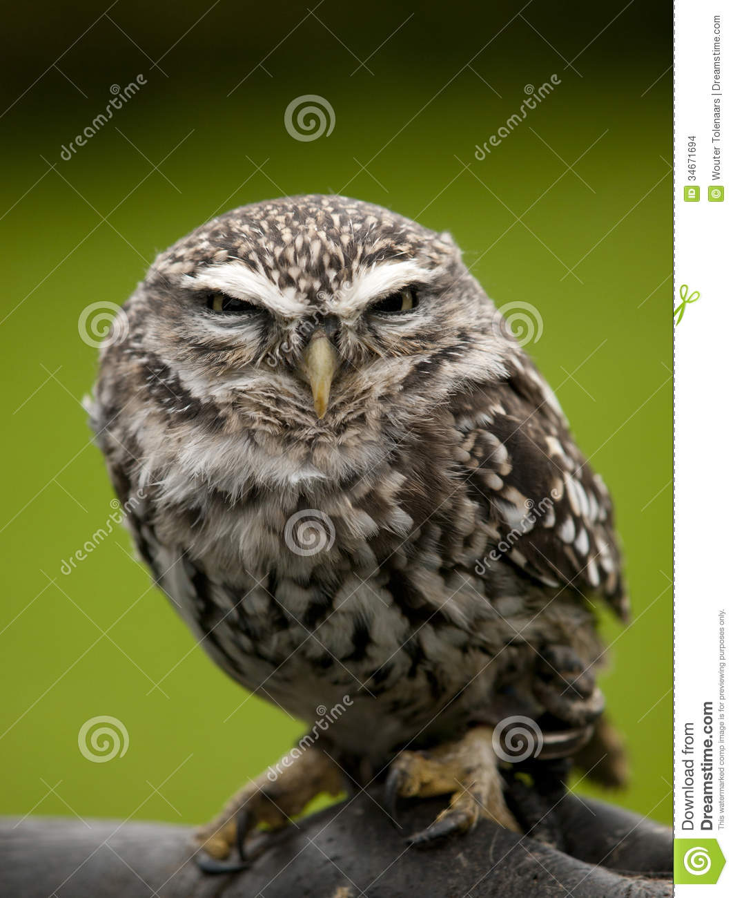 Angry Owl Clipart - Clipart Suggest