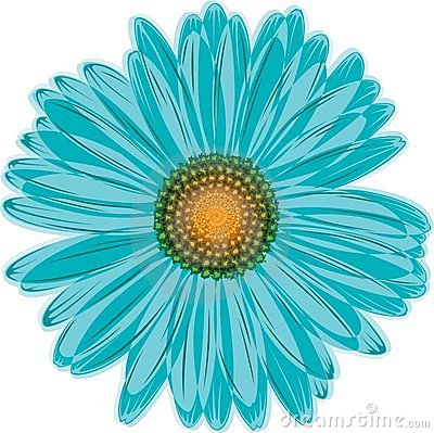 Aqua Blue Daisy Flower Stock Photo   Image  14800940