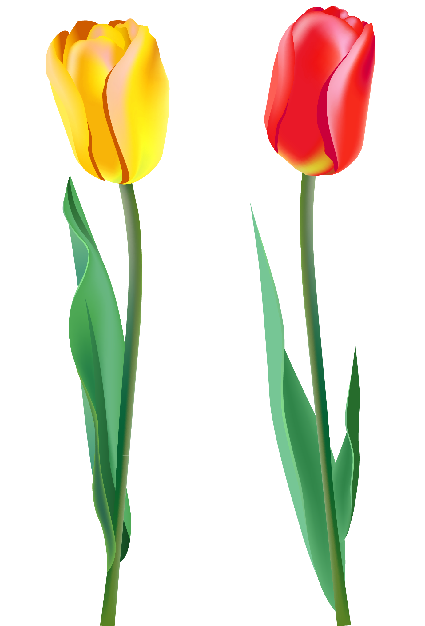 red tulips clipart clipart suggest free tulip clipart borders free clipart tulip bouquet