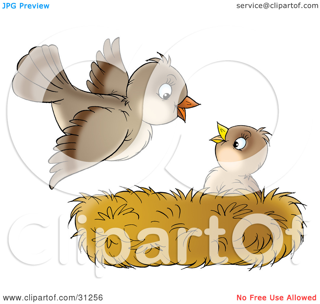 Clipart Illustration Of A Cute Baby Bird In A Nest Looking Up At Its