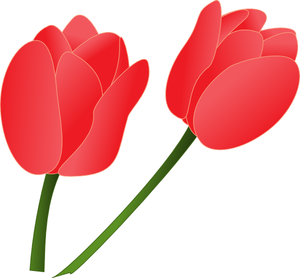 Red Tulip Clip Art At Clker Com Vector Clip Art Online Royalty Free