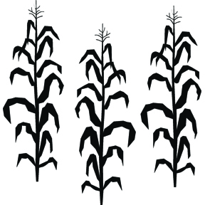 Clip Art Corn Stalk Clipart corn stalk clipart kid more than vinyl
