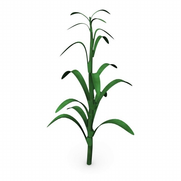 Clip Art Corn Stalk Clipart corn stalk clipart kid render jpg