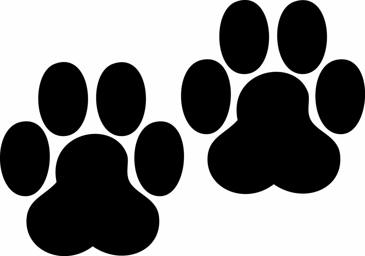 Dog Paw Prints Pictures   Clipart Best