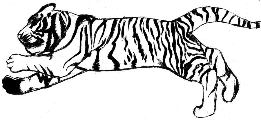 Drawing Tiger In Black And White Clipart Best #bEoBbF ...