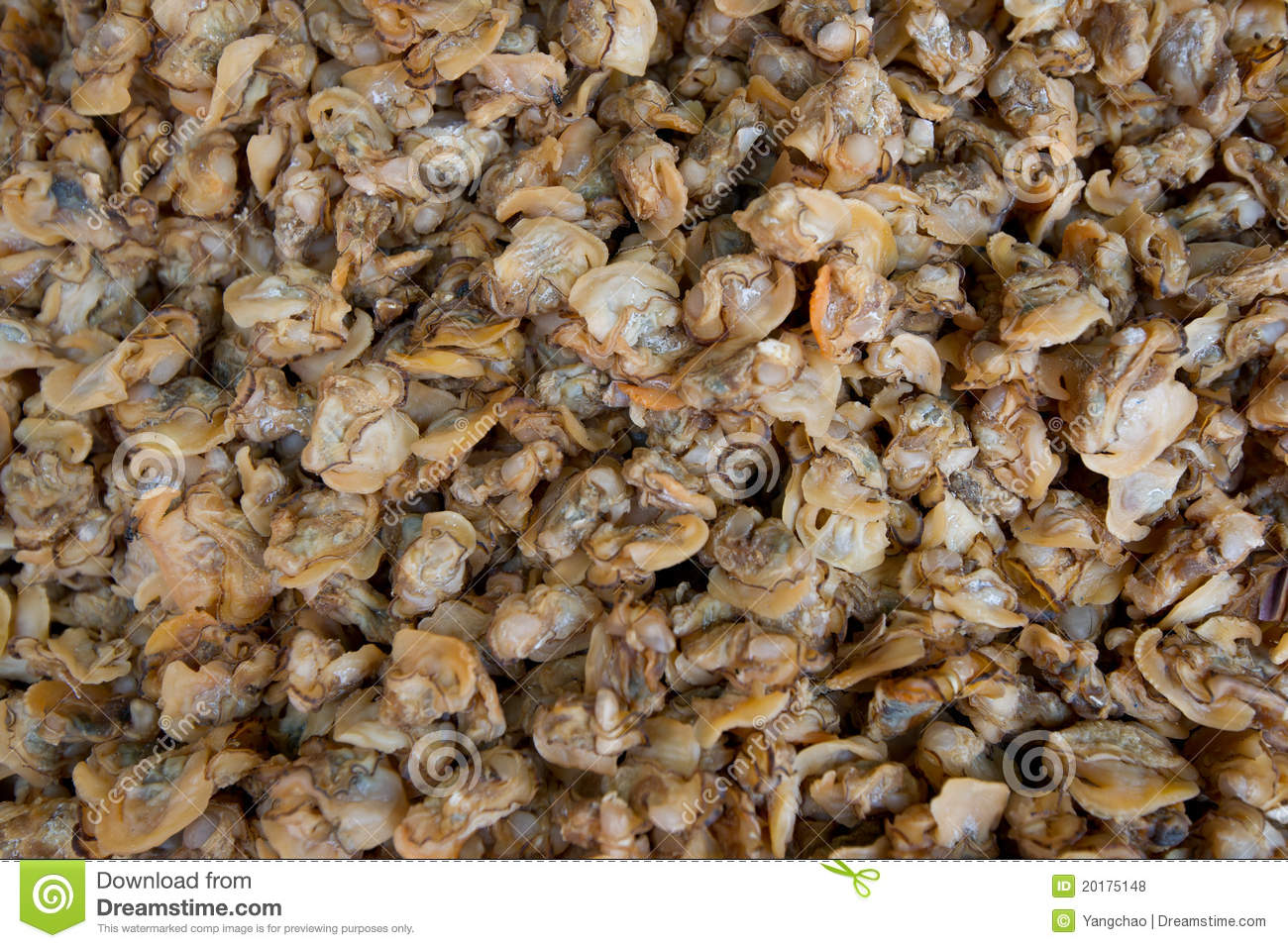 Dried Oyster Meat Royalty Free Stock Photos   Image  20175148