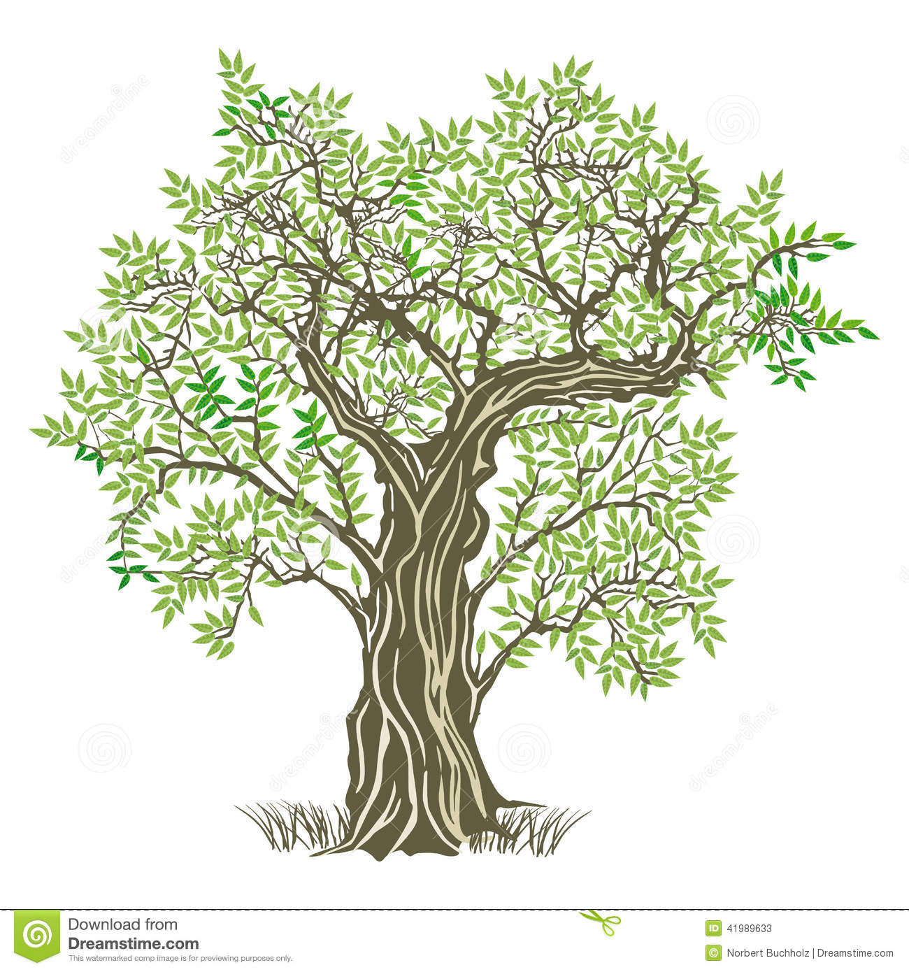 Olive Tree Clipart - Clipart Kid