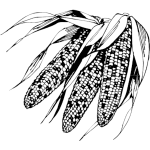Corn Indian Clipart Cliparts Of Corn Indian Free Download  Wmf Eps