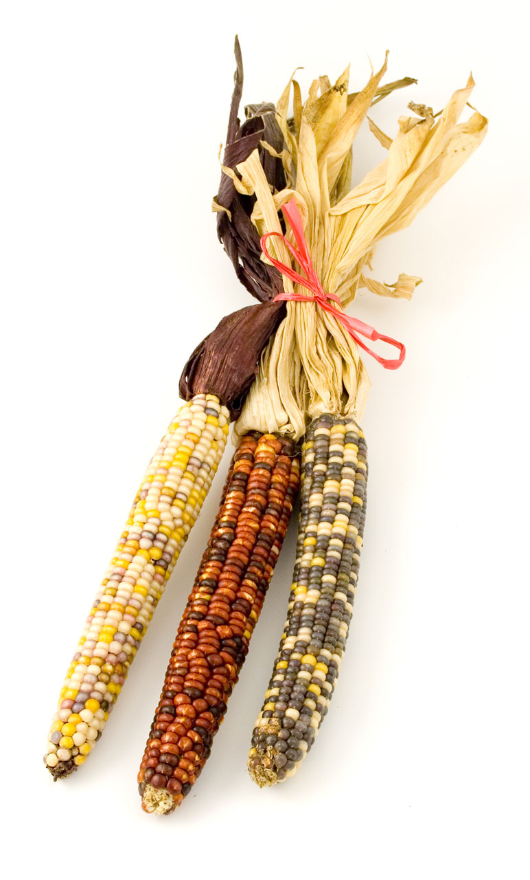 Indian Corn Clipart Images   Pictures   Becuo
