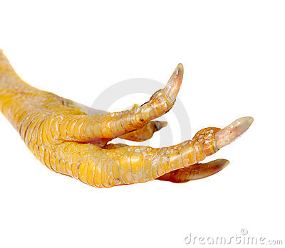 Chicken Feet Clipart Chicken Foot 4175446 Jpg