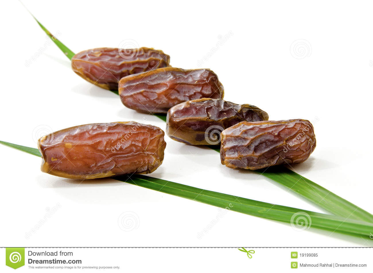 Dates Fruit Royalty Free Stock Photo   Image  19199085