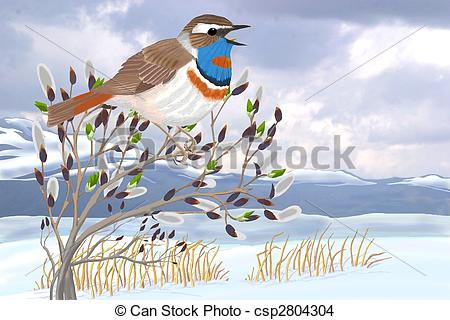 Drawing Of Bluethroat On Willow   Bluethroat On Willow   Luscinia