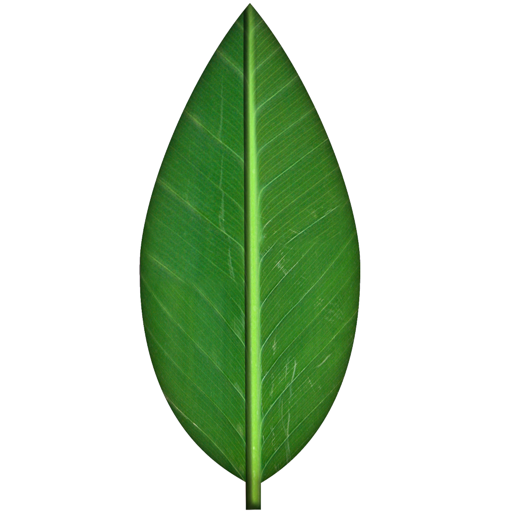 There Is 18 Green Leaves Tree   Free Cliparts All Used For Free