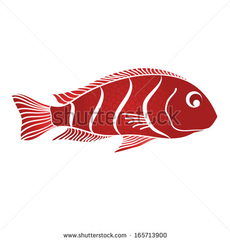 Red Drum Fish Clipart Red Ornamental Fish   Stock
