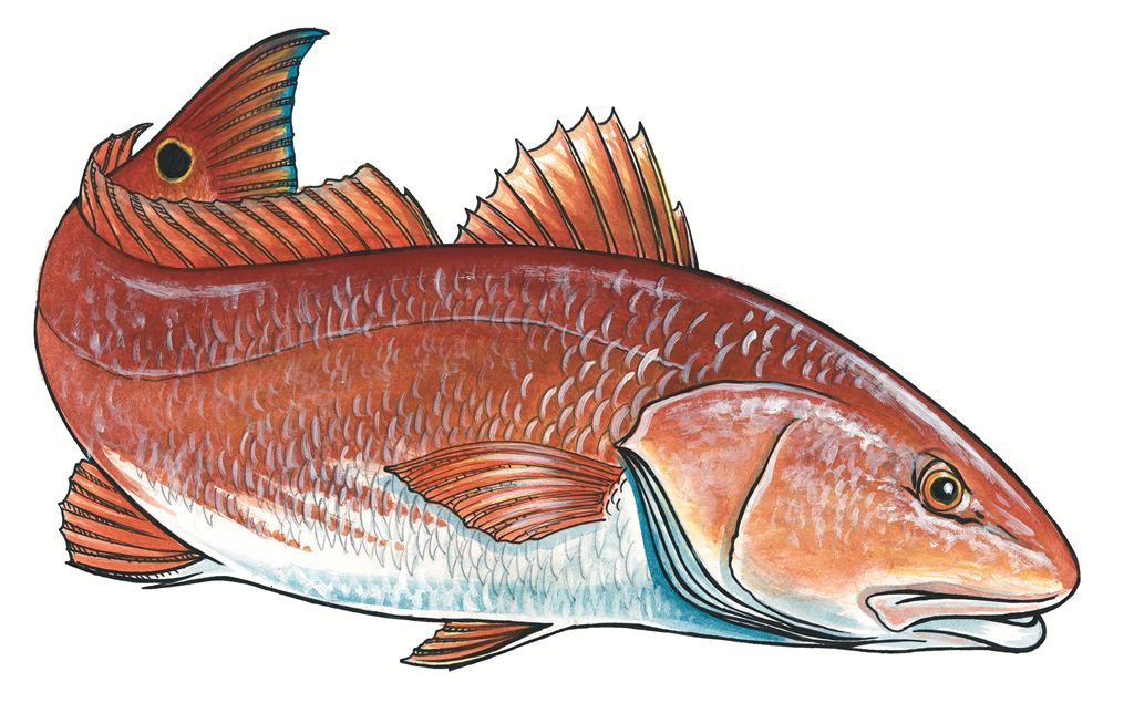 how to fish for redfish