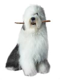 Dulux Dog Logo