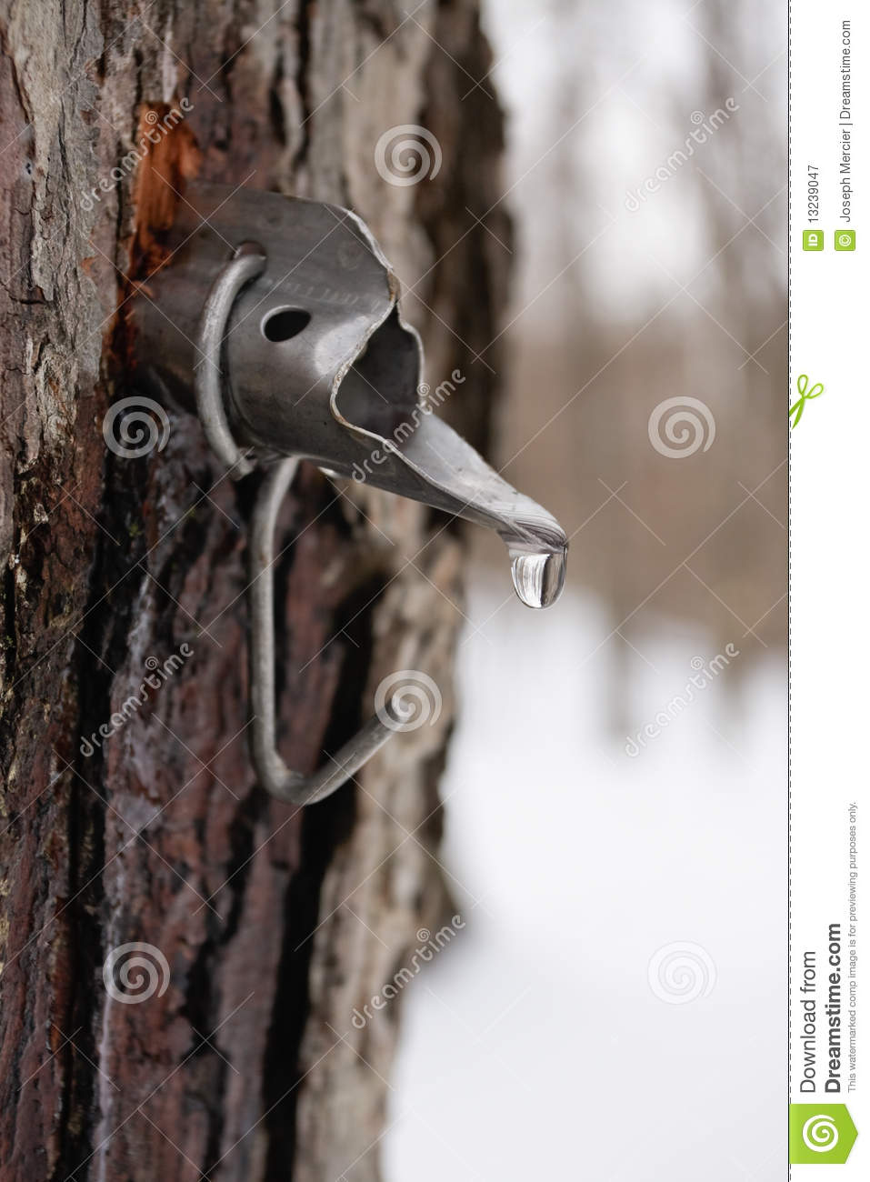Sap On A Tree Clipart