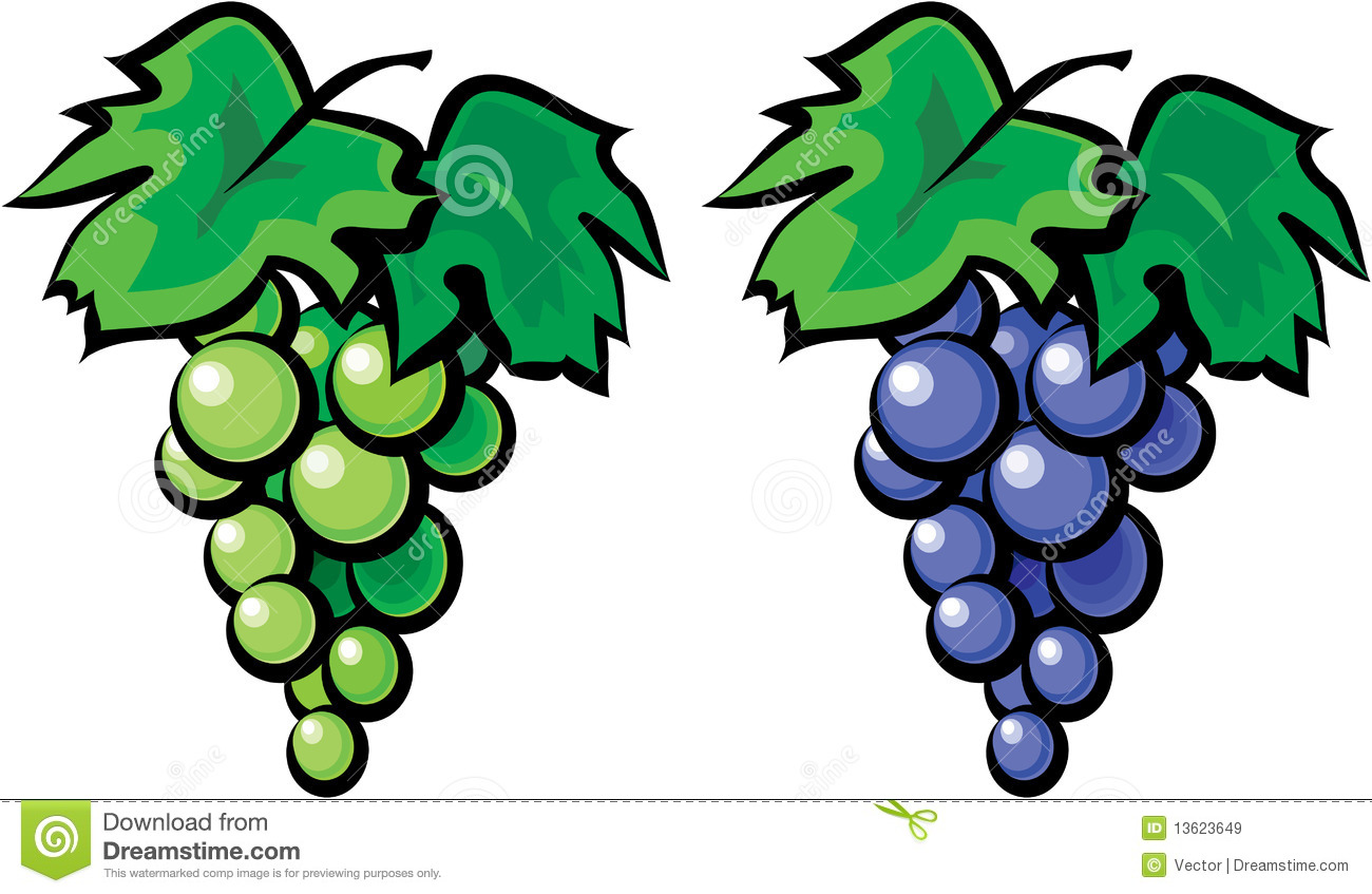 Grape Vine Illustration Royalty Free Stock Images   Image  13623649