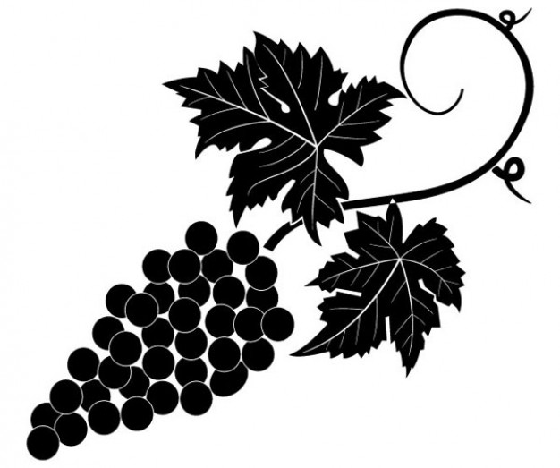 Grapevine Vector Image   Download Free Vector