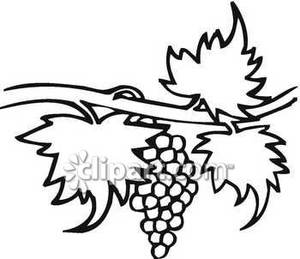 Black And White Grape Vine   Royalty Free Clipart Picture