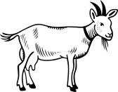 Goat Clipart Black And White 10296515 Goat Domestic On White