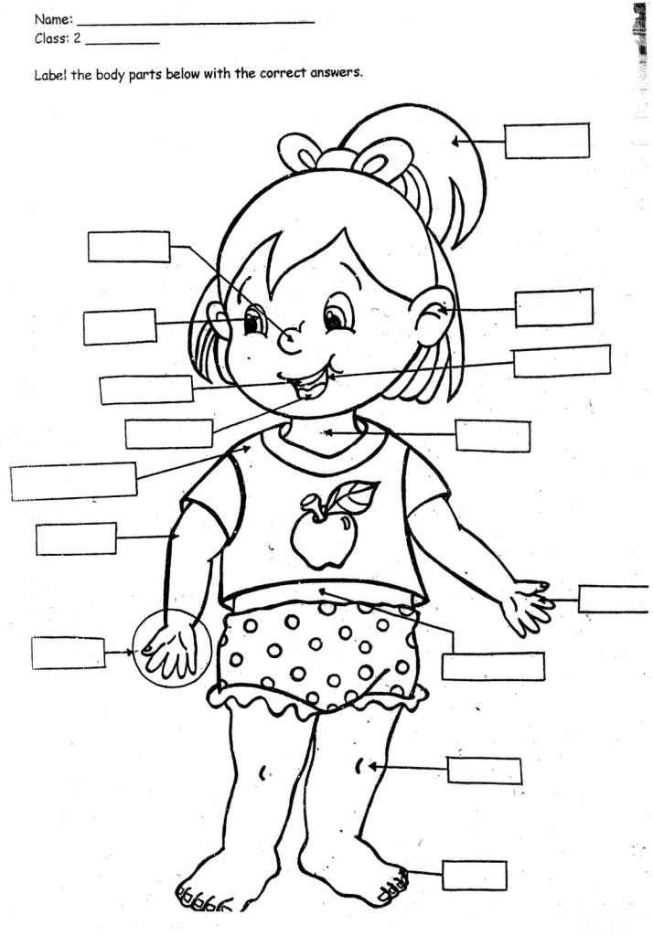 Print Body Parts Coloring Pages For Kids Laptopezine - Clipart Kid