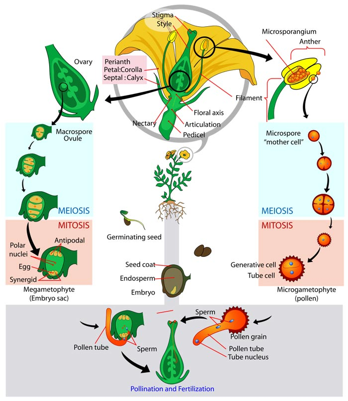 an analysis of the topic of the parasitic characteristics organisms Biology is the natural science that involves the study of life and living organisms, including their physical structure, chemical composition, function, development and.