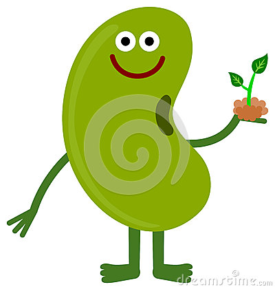 Green Bean Plant Clipart Images   Pictures   Becuo