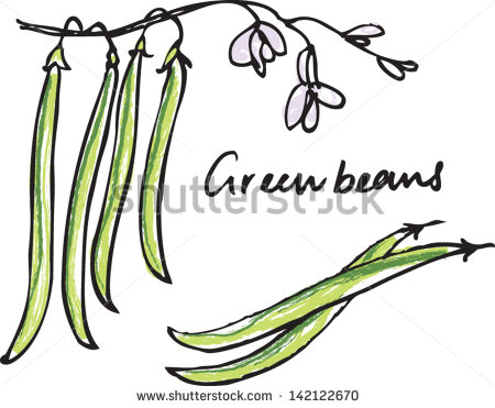Green Bean Plant Illustration Fresh Green Beans Whole