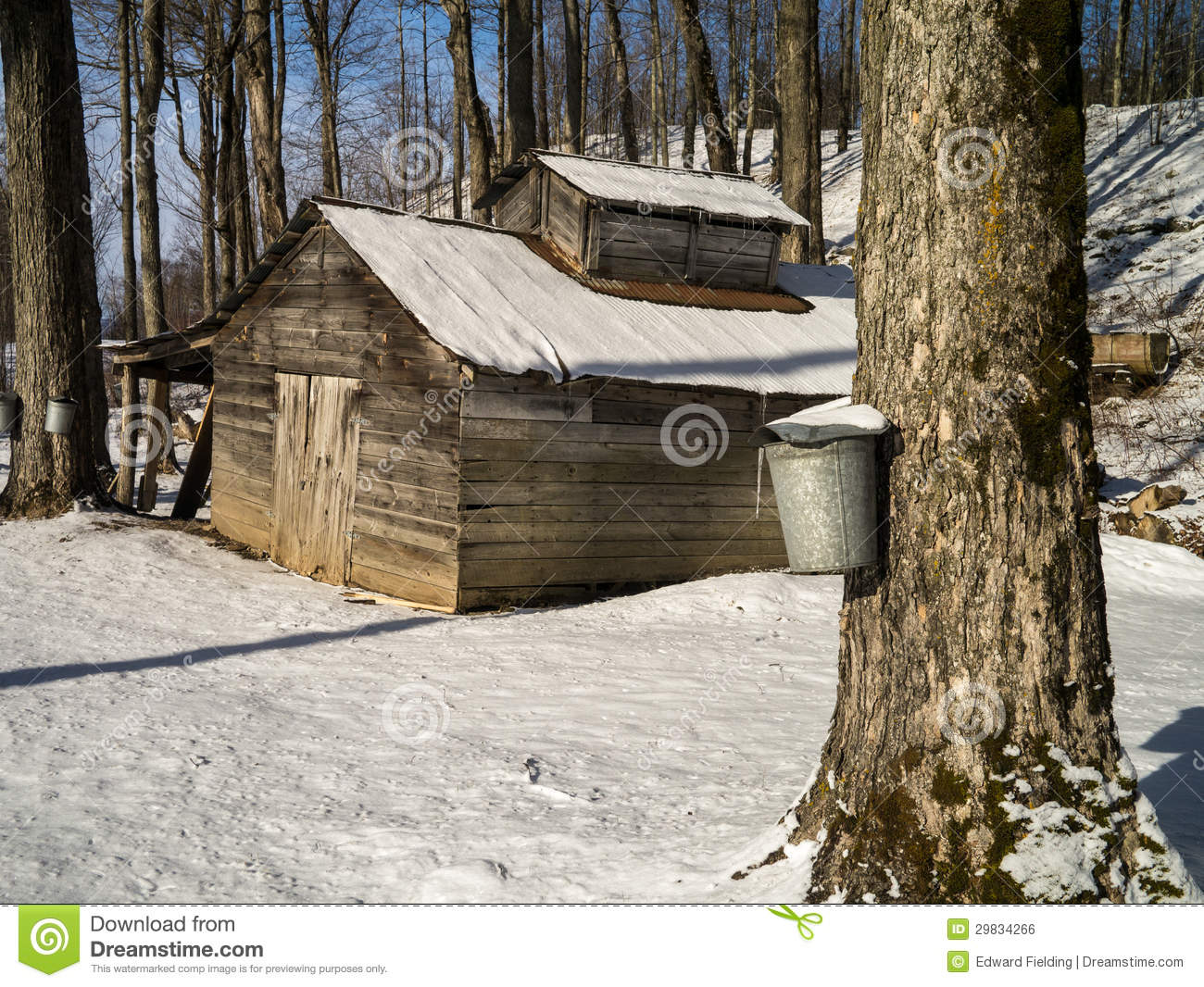 Maple Sugaring Season   Sugar House And Pails Royalty Free Stock Image