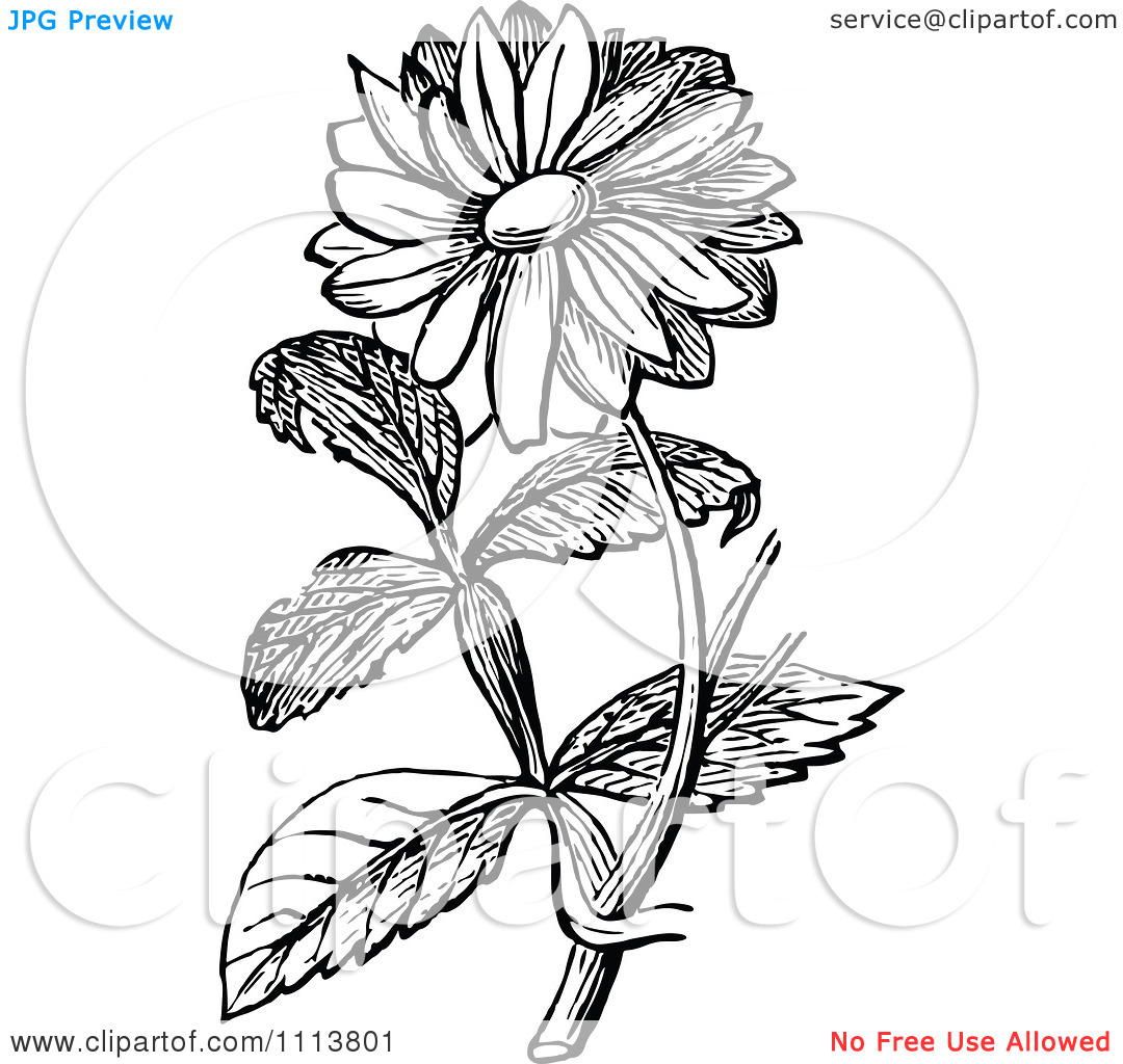 free black and white clip art sunflowers - photo #50