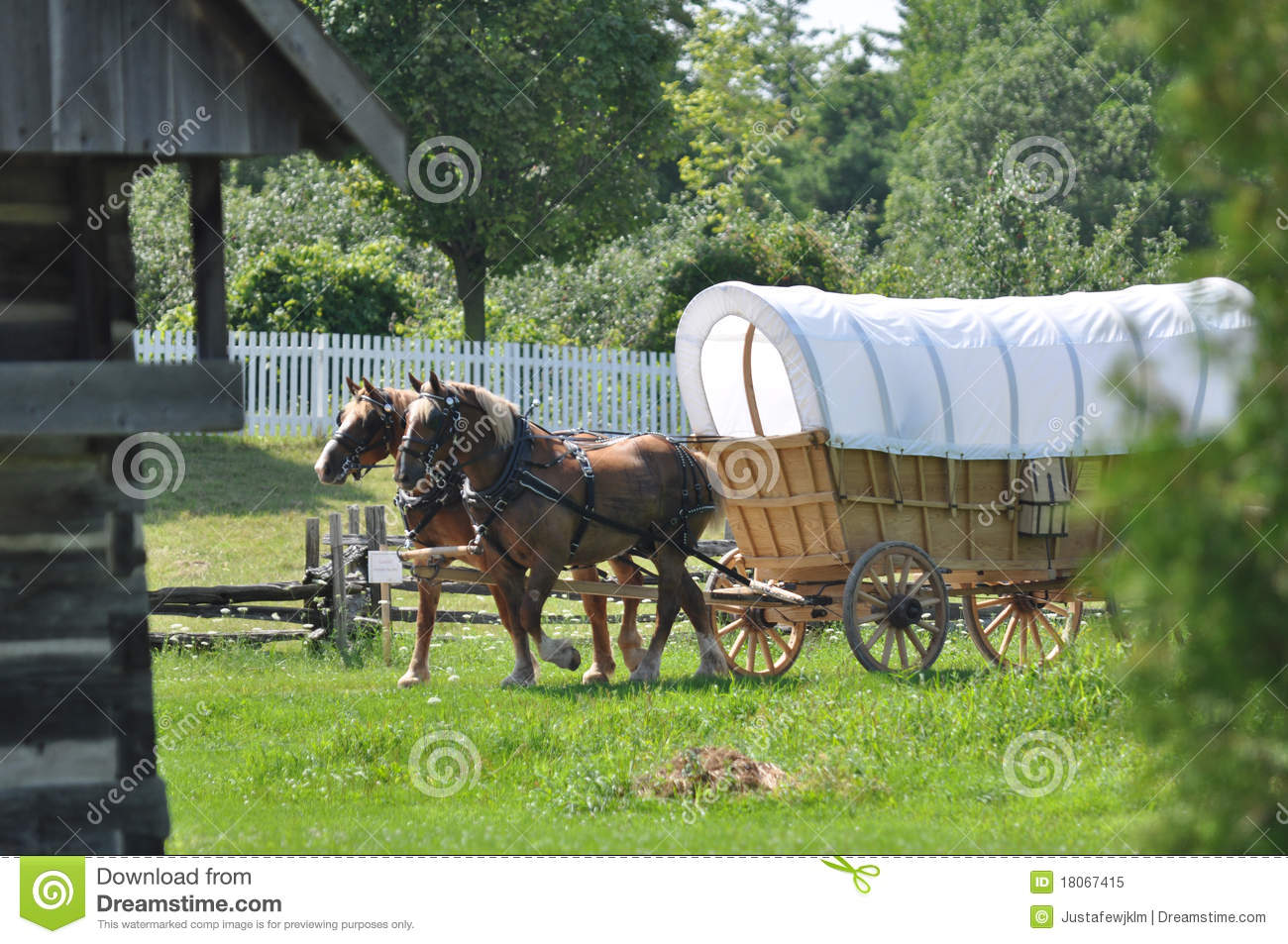 Belgian Draft Team On Covered Wagon Royalty Free Stock Photo   Image