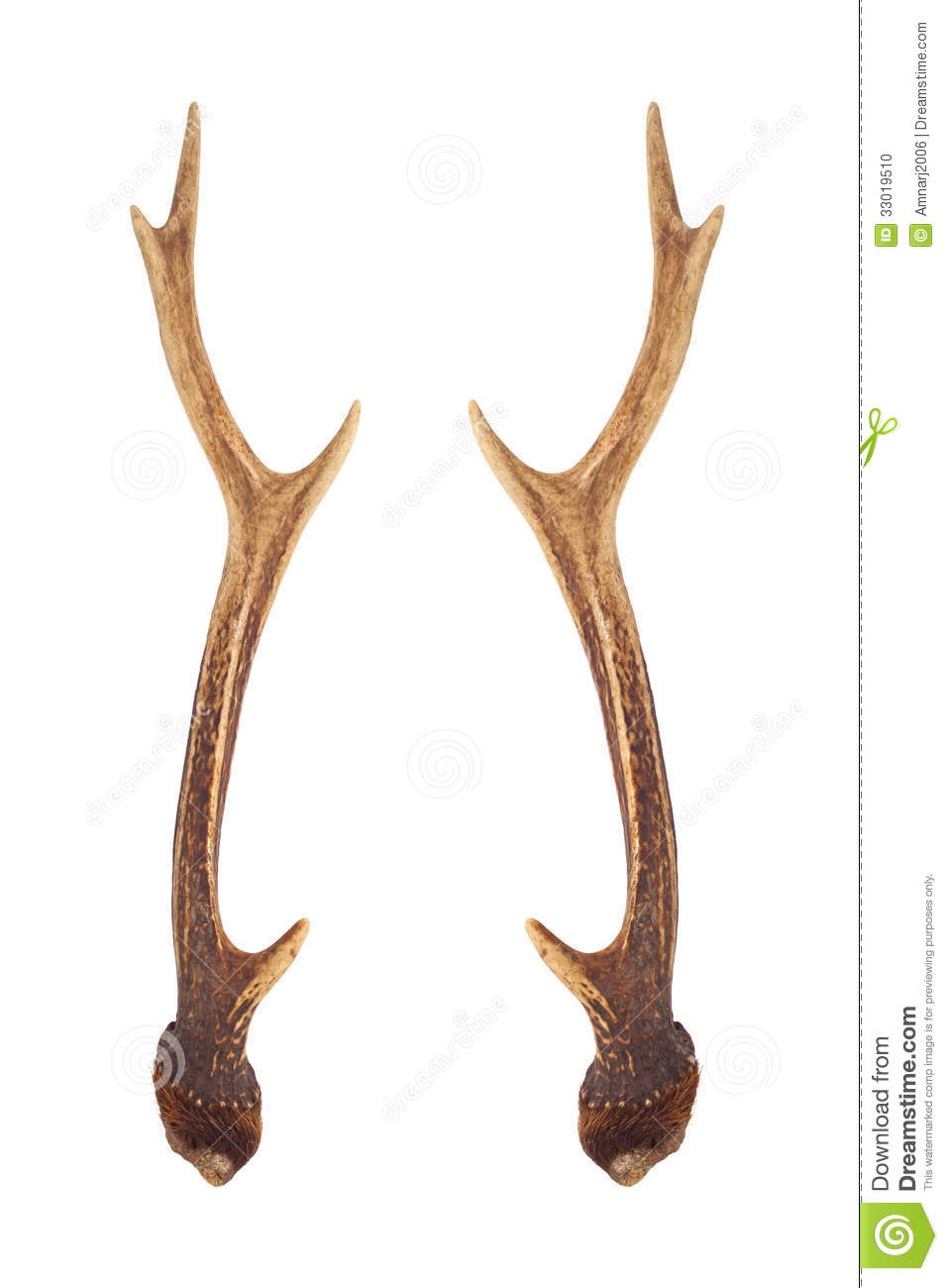 Deer Horns Stock Photo   Image  33019510