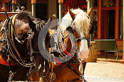 Picture Of Draft Horses Working Pulling A Wagon