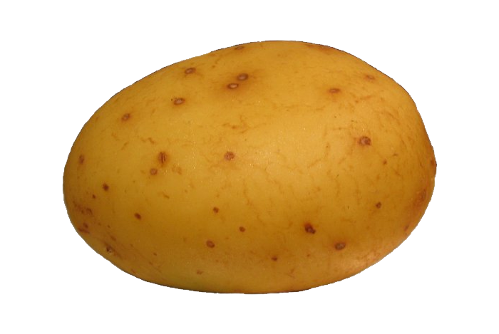 Download Png Image  Potato Png Images Pictures Free Download