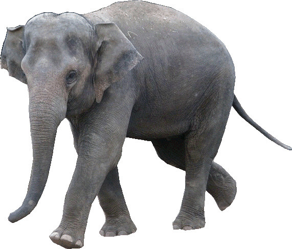 Elephant Clipart Lge   Flickr   Photo Sharing