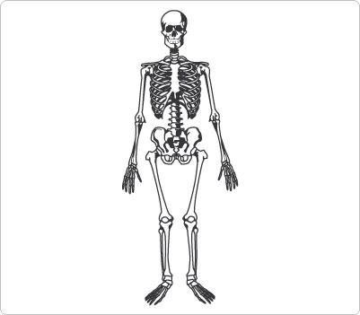 blank pain diagram skeleton clipart clipart suggest  skeleton clipart clipart suggest