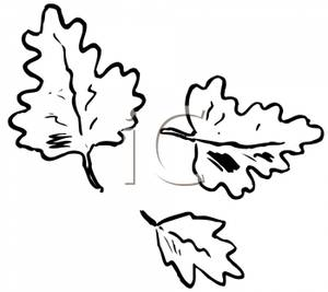 Black And White Oak Tree Clipart Black And White Fall Clip Artblack