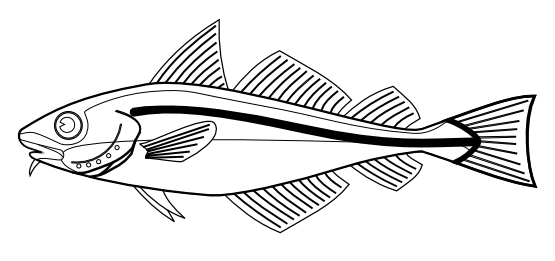 Cod Fish Png Png  Codfish Black White Line