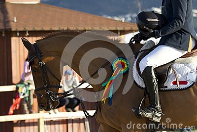 Horse Winner Royalty Free Stock Photo   Image  30504025
