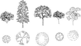 Aerial View Trees Stock Vectors Illustrations   Clipart