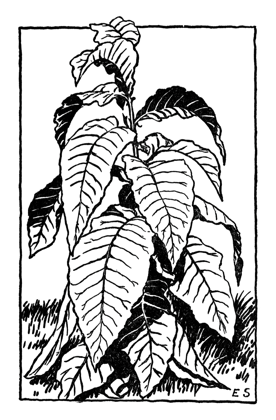 Black And White Plant With