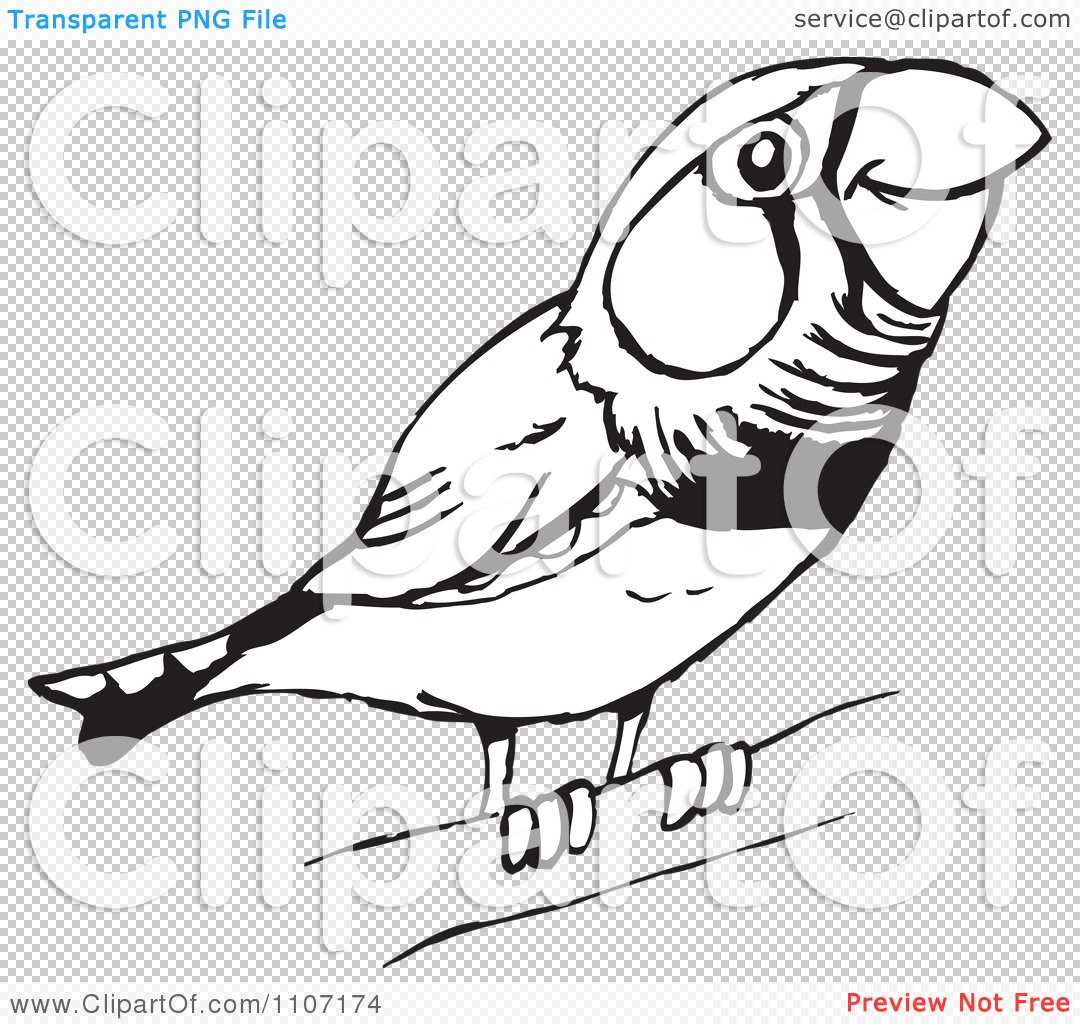 Clipart Cute Black And White Perched Zebra Finch Royalty Free Vector