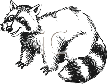 Raccoon Face Clipart Black And White raccoon black and white clipart ... Raccoon Face Clip Art Black And White