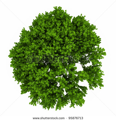 Stock Images Similar To Id 134244833   Trees Top View  Easy To Use